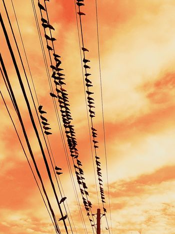Sunset Sky Cloud - Sky Cable Power Line  Nature Electricity  Silhouette Growth Telephone Line Perspective Popular Shapes And Forms Color Palette San Juan PR Abstract Bird Watching
