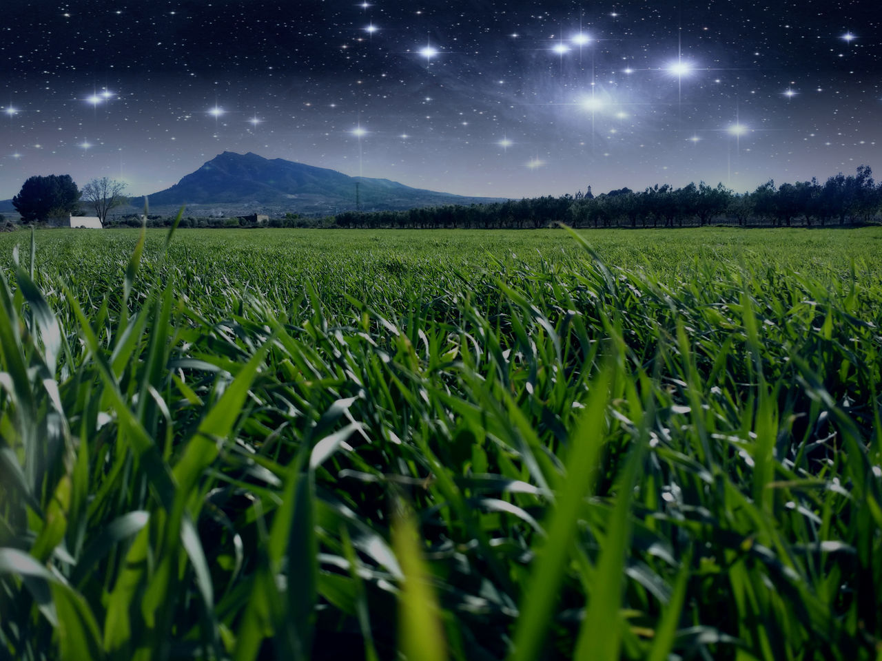 Beautiful stock photos of stars, Beauty In Nature, Caudete, Field, Forecasting