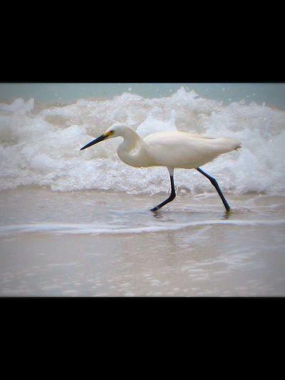 Ocean Florida Coast Bird On Beach