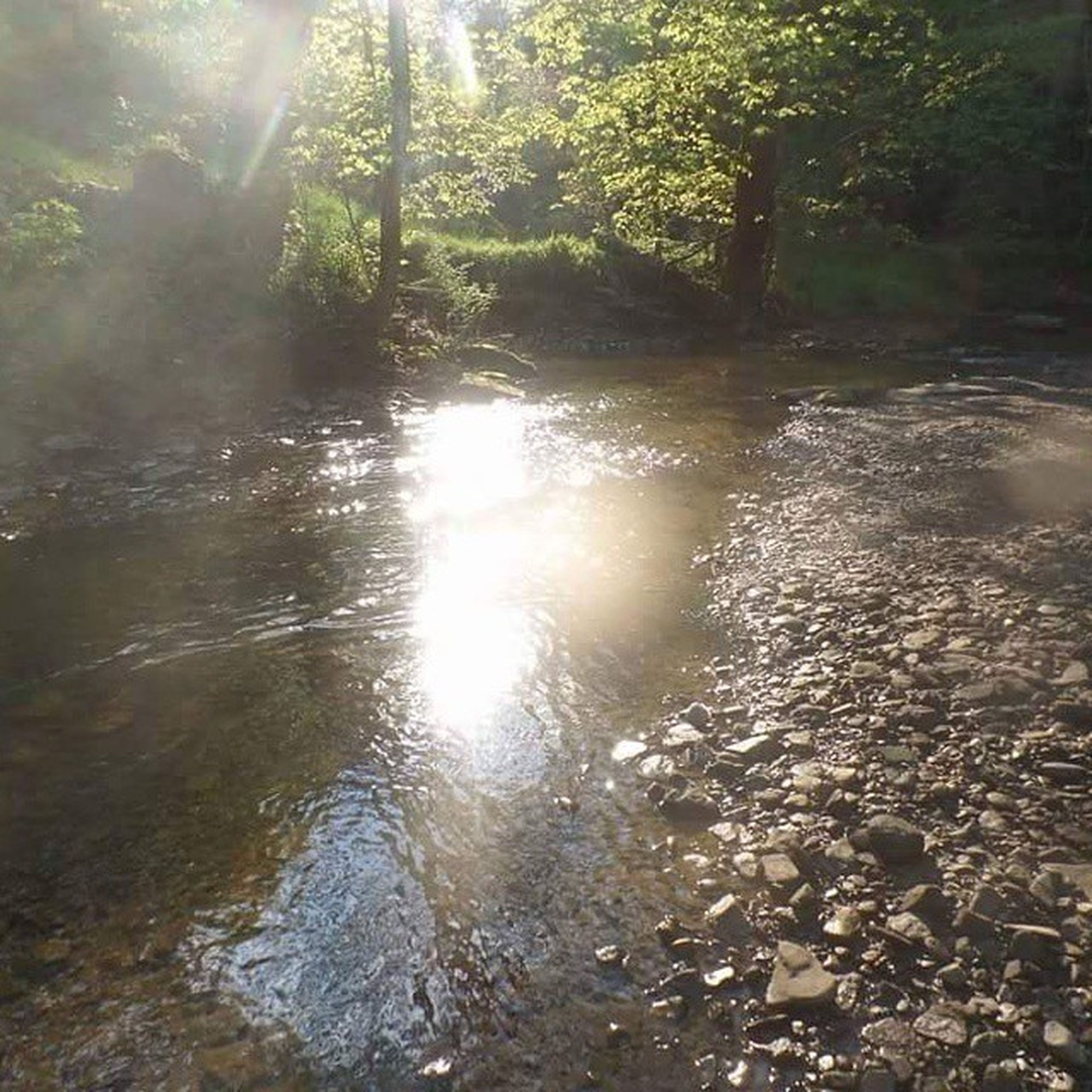 water, sun, sunlight, sunbeam, tranquility, reflection, tree, tranquil scene, nature, lens flare, beauty in nature, scenics, lake, forest, growth, river, idyllic, stream, outdoors, no people