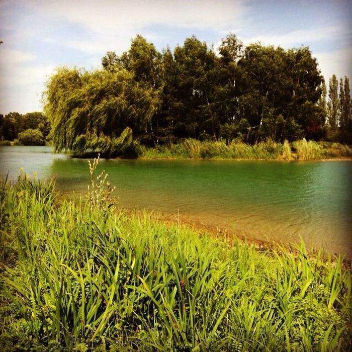 Lake Campagne Colourful EyeEm Nature Lover Green Loiret