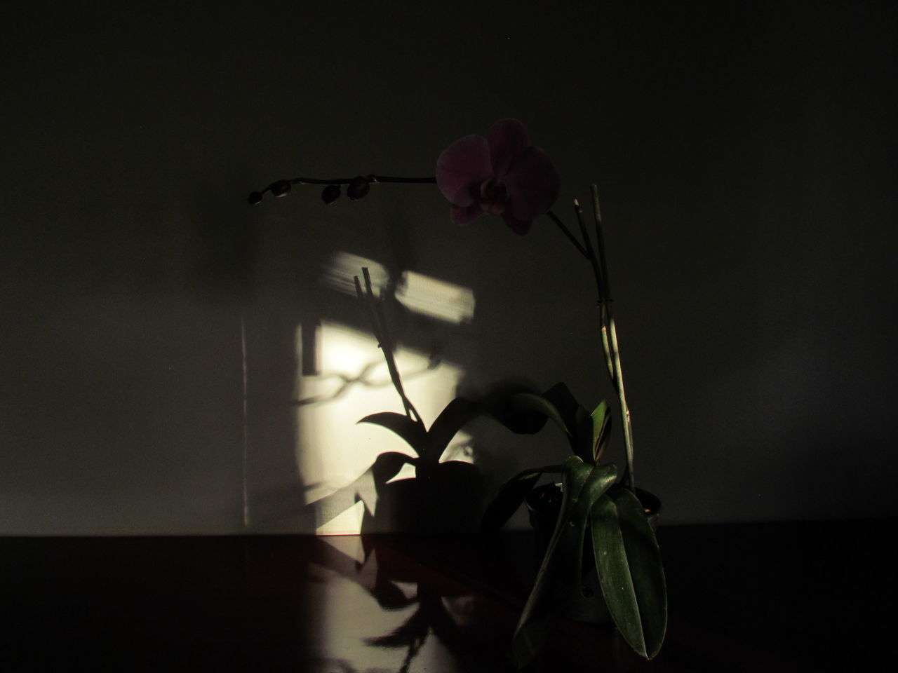 Shadow Flower Indoors  No People Night Fragility EyeEm Plant Beauty In Nature Eyeemphotography Photography Nature's Close-up Outdoors EyeEm Gallery Abandoned Orchids Tranquil Scene Orchids Collection