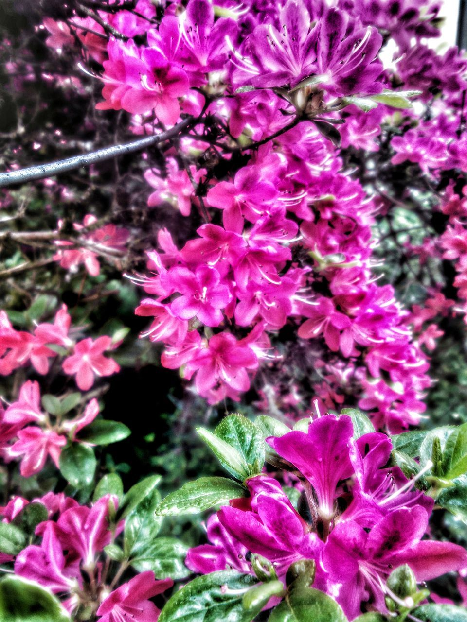 growth, flower, nature, plant, purple, fragility, no people, beauty in nature, lilac, blooming, outdoors, freshness, close-up, day