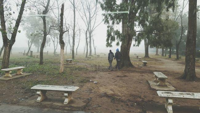 Fog Foggy Day !