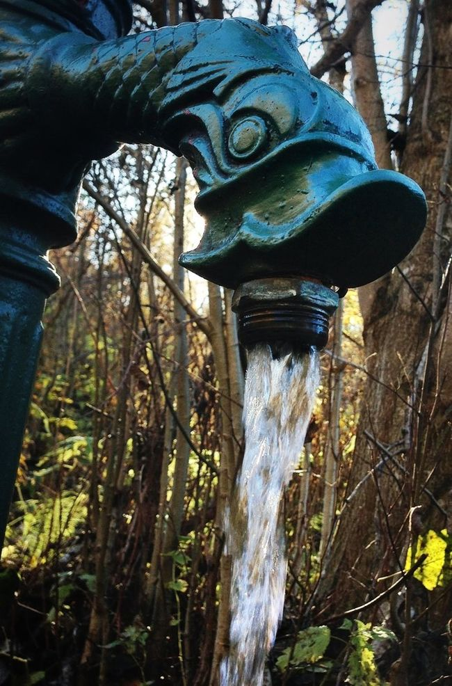 WAter from a spring. Water_collection EyeEm Nature Lover Eye4nature Eye4photography