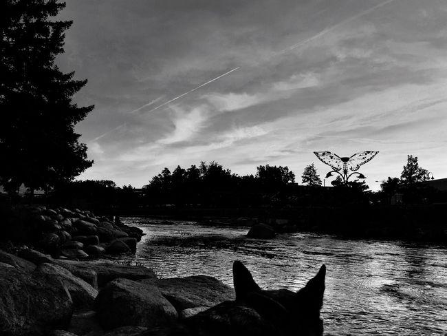 Taking Photos Ruben Sierra Blackandwhite Stark Nobody Soltitude Dogs Dog Ears Silhouette Tallac City