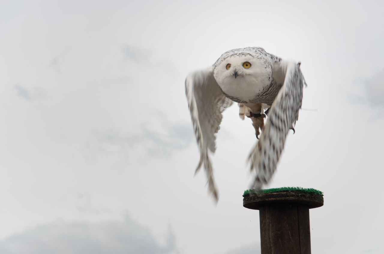 Beautiful stock photos of eule, bird, animal themes, one animal, animal wildlife