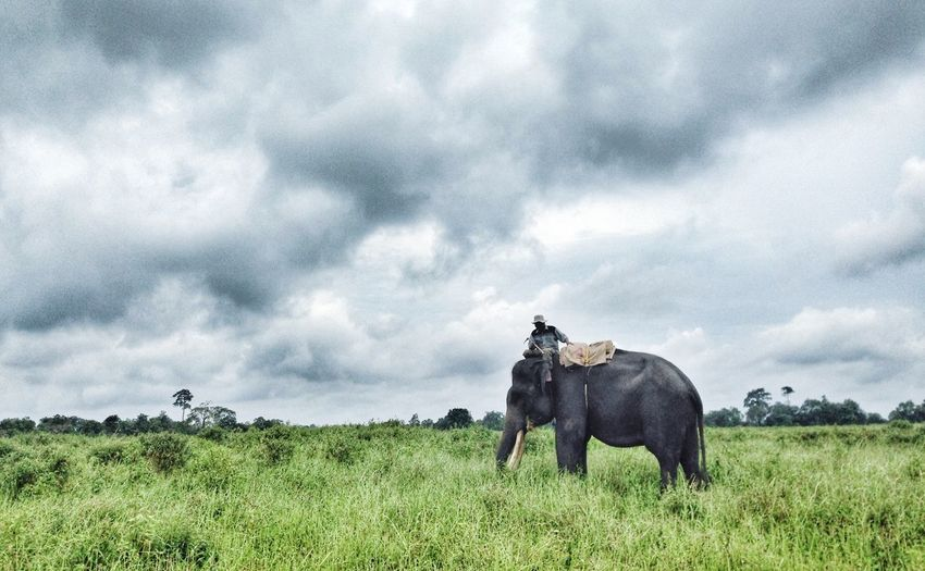 Padang sabana Way Kambas First Eyeem Photo Elephant ♥ Conservation