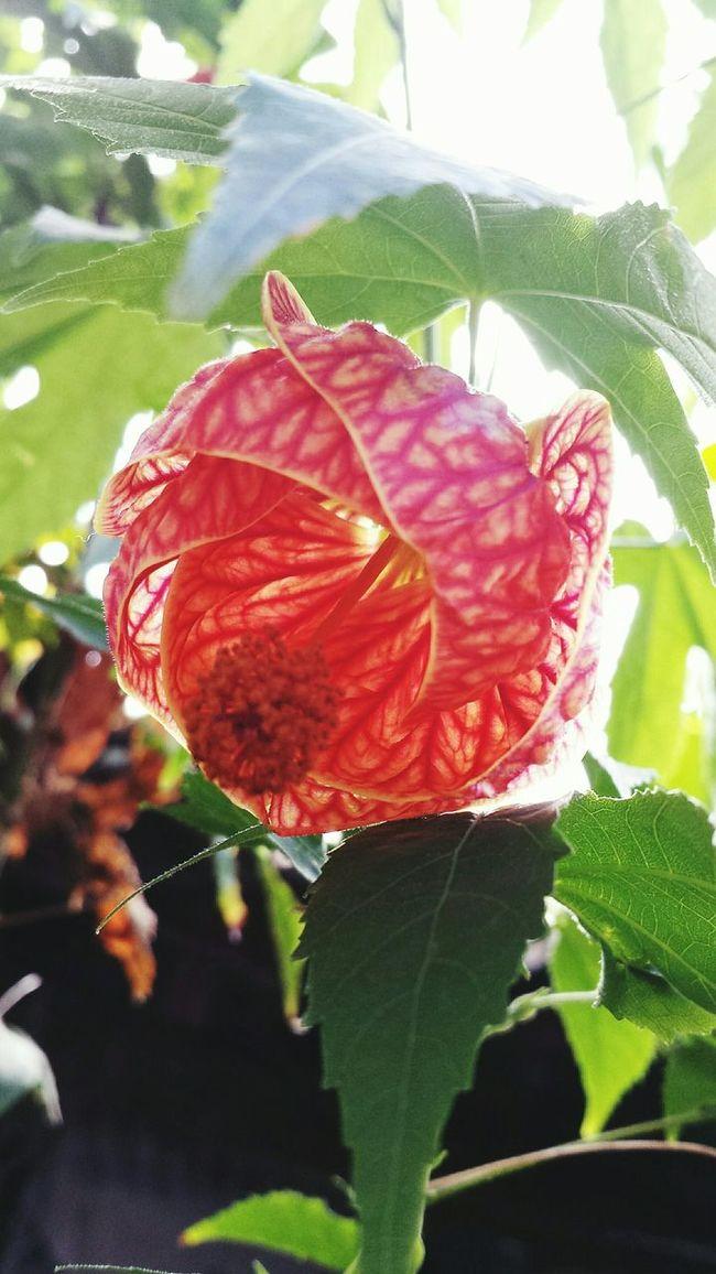 Flower Orange Flower Photography Flores Abajour Naturelovers Natureza 🐦🌳 EyeEm Nature Lover Potography
