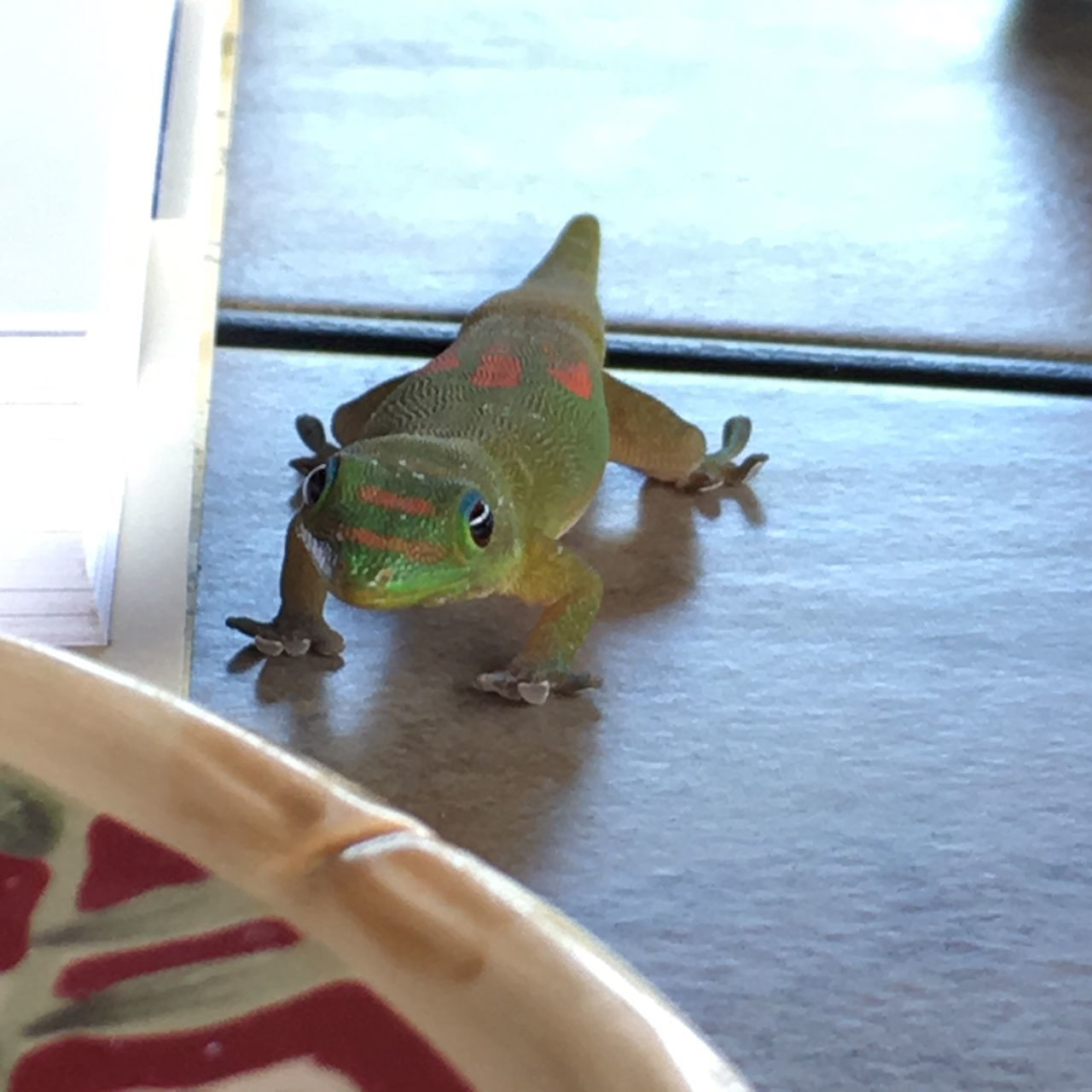 One Animal Animal Themes Close-up Day Green Color Animals In The Wild Reptile Indoors  Water Nature