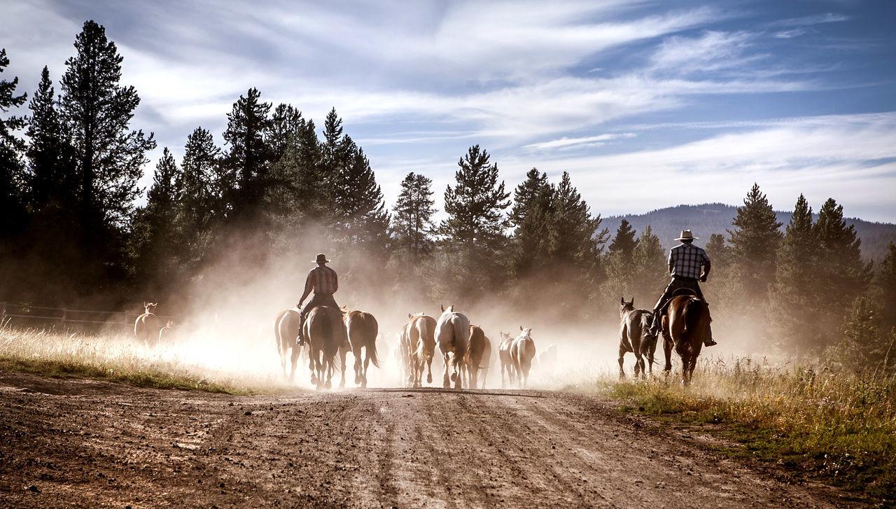 Beautiful stock photos of amerika, All Horse Riding, Animal Themes, Cloud, Day