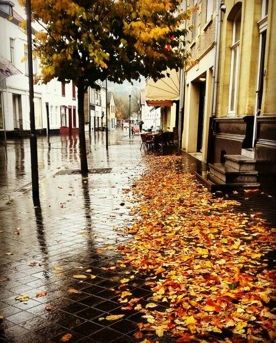 After The Rain After The Rain Stopped Architecture Autumn Autumn Colors Autumn Leaves Beauty In Nature Building Exterior Built Structure Day Extreme Weather Fall Fall Colors Fall Leaves Nature Outdoors See What I See Tree Walking Around Taking Pictures Water Wet