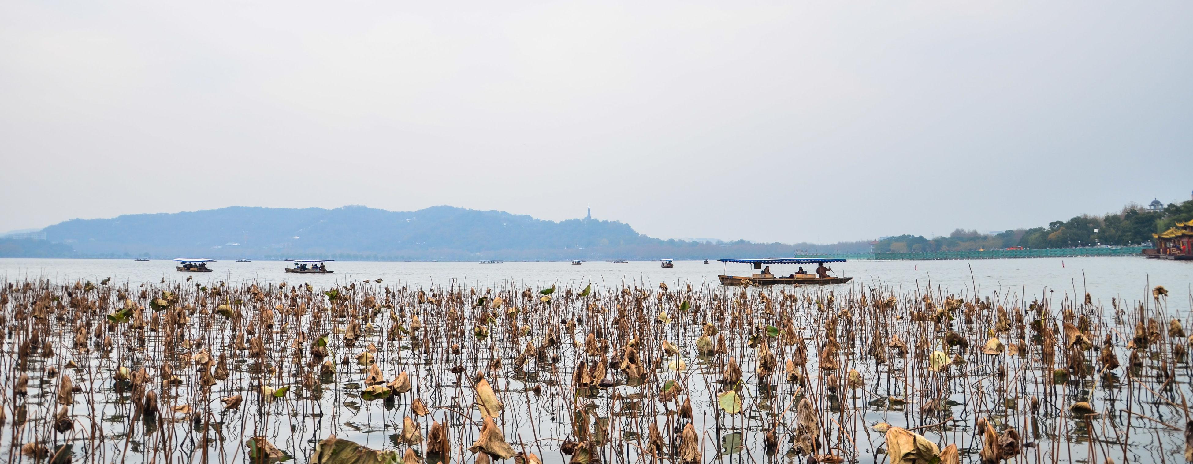 A pleasant city,love to living here. Westlake West Lake Hangzhou Hangzhou,China Withered Lotus Deep Autumn Beauty