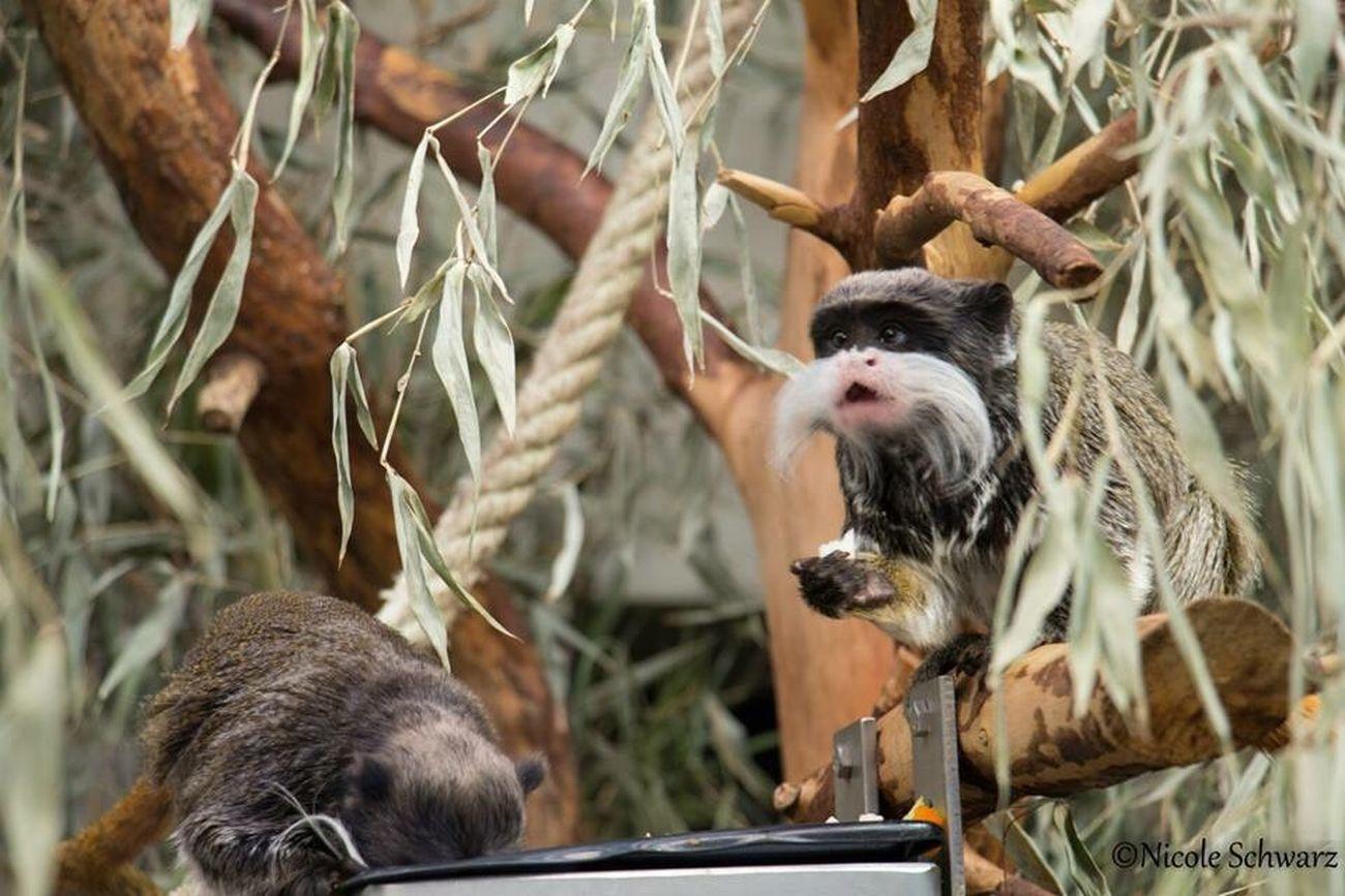 Zoo Animals Affen