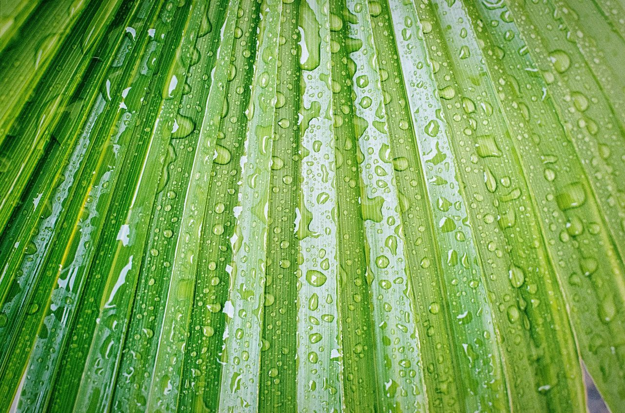 Drop Water Wet Leaf Green Color Season  Full Frame Backgrounds Close-up Freshness Growth Droplet Rain Nature Fragility Water Drop Beauty In Nature Purity EyeEm Nature Lover 35mm Film Photography Filmisnotdead