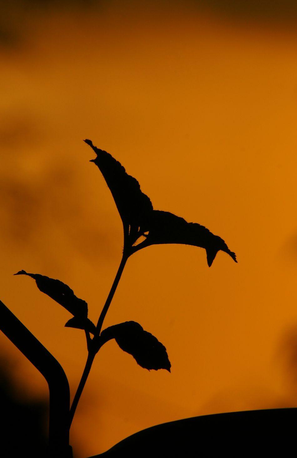 Sunset Silhouette Nature Alpha700 Sonyphotography Siluetes Sunsetlovers 70-300mm Tamronlens Sunsetporn