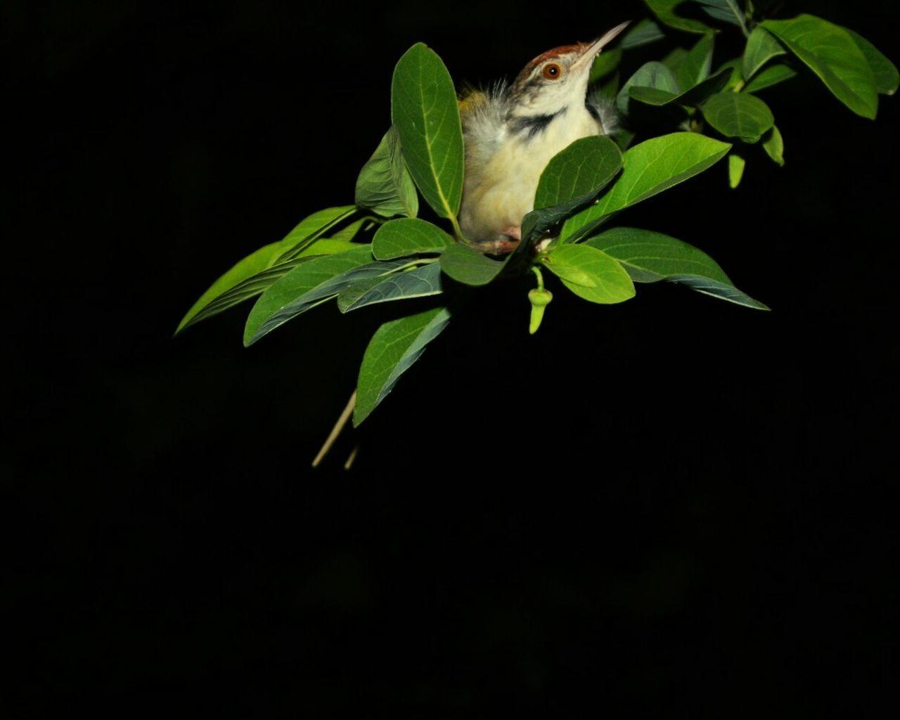 Bird Photography Beauty In Nature Nature Selective Focus Closeup Shots Life Plant Birds Of EyeEm  Birds_n_branches Birdie Nightphotography Nightshot darkness and light