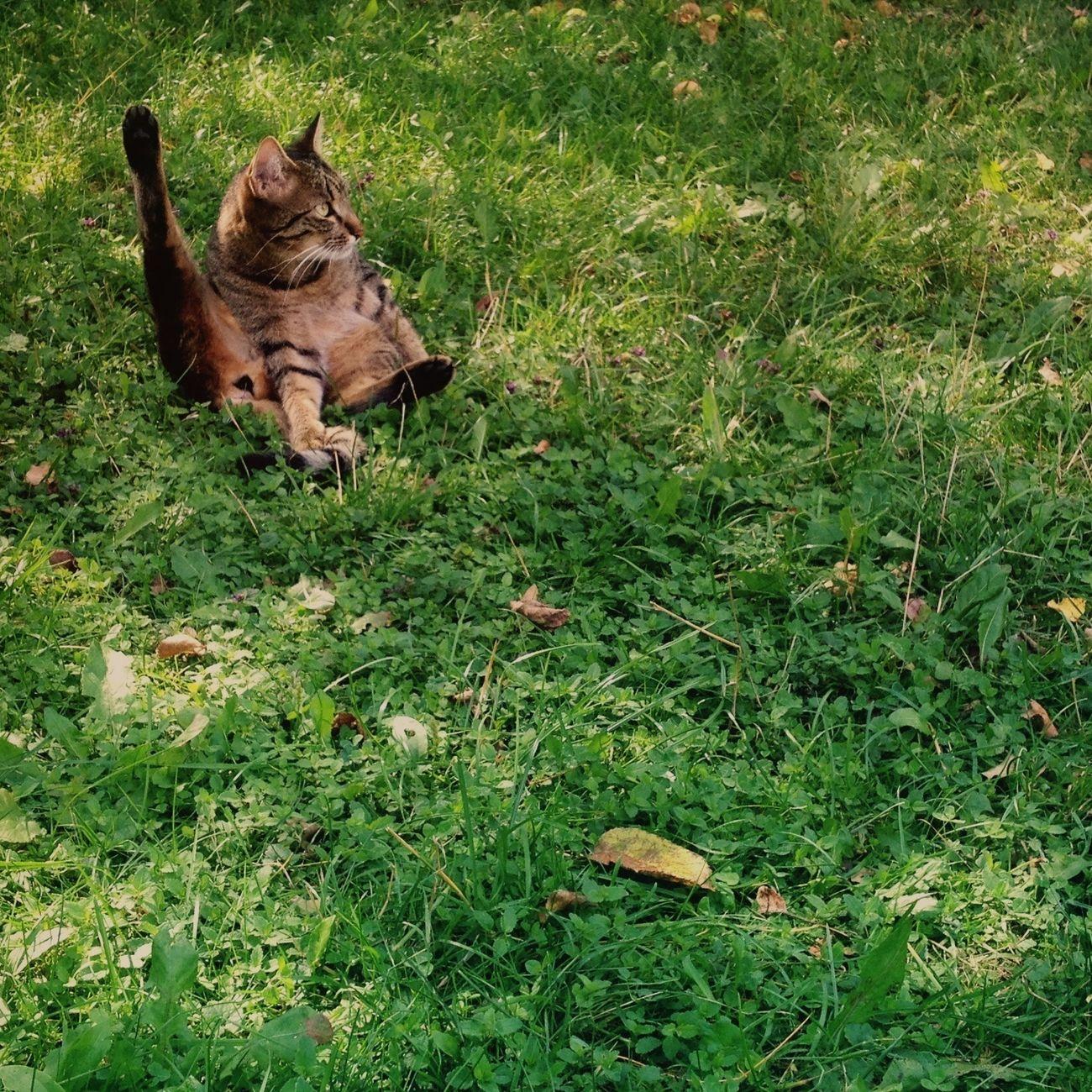 Kitty doing Yoga