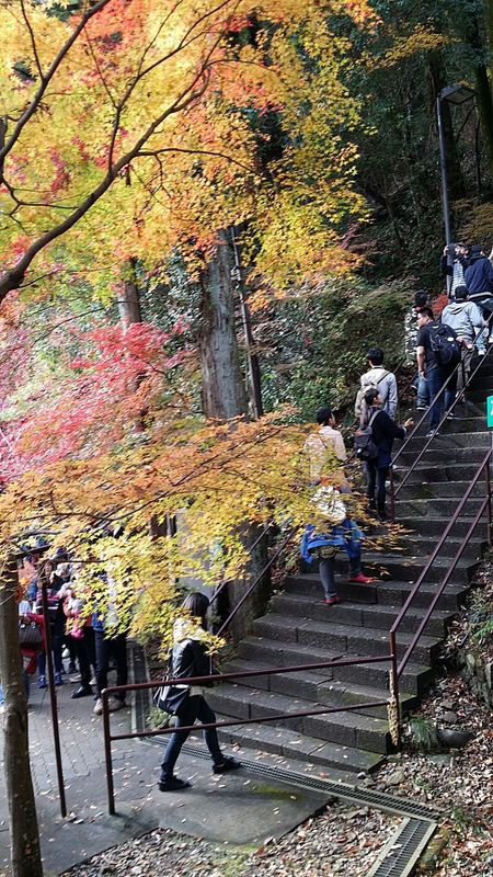 Takao Takaoautumn Takaoautumn2016 Japanautumn Japanautumn2016 Autumncolours Autumn Colours Maple Trees Takaonature Japannature