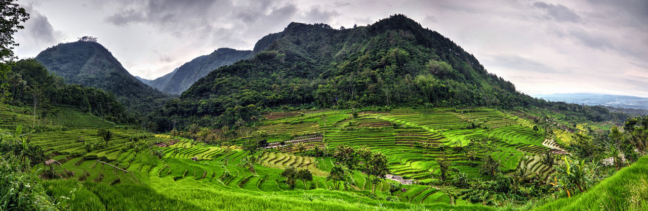 Beautiful stock photos of indonesia, Green, Horizontal Image, Indonesia, Yogyakarta