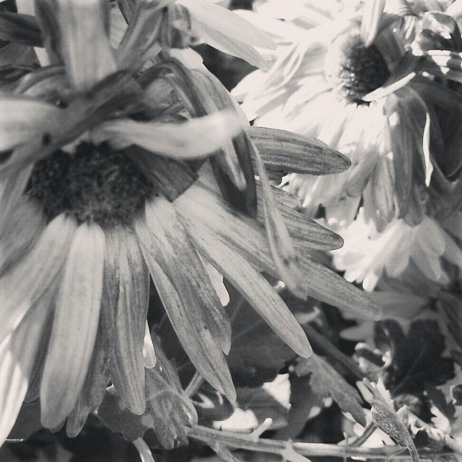 Flowers Natural Photo Photograph