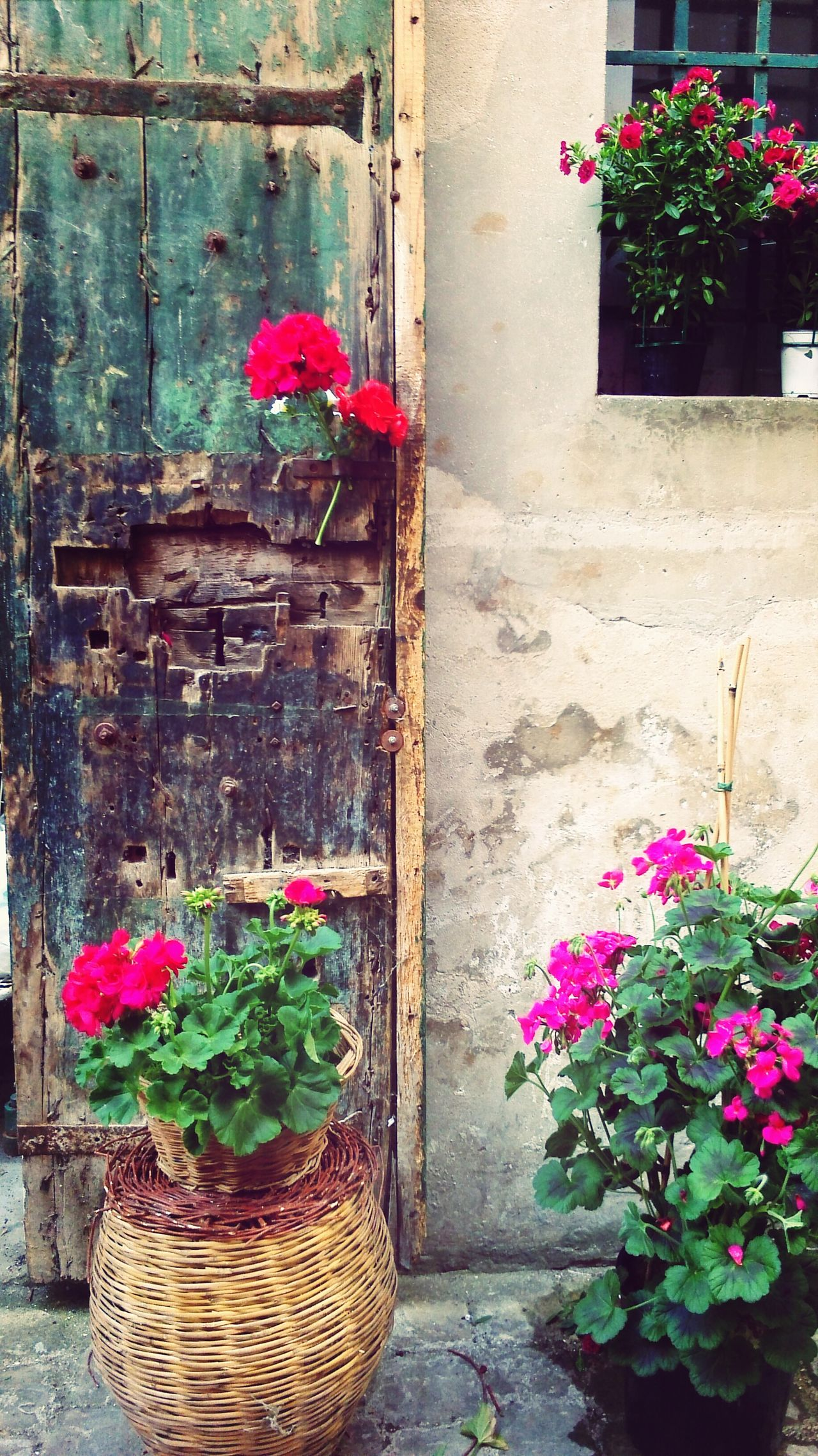 Enjoying Life Colorful Postcards From Italy Flowers