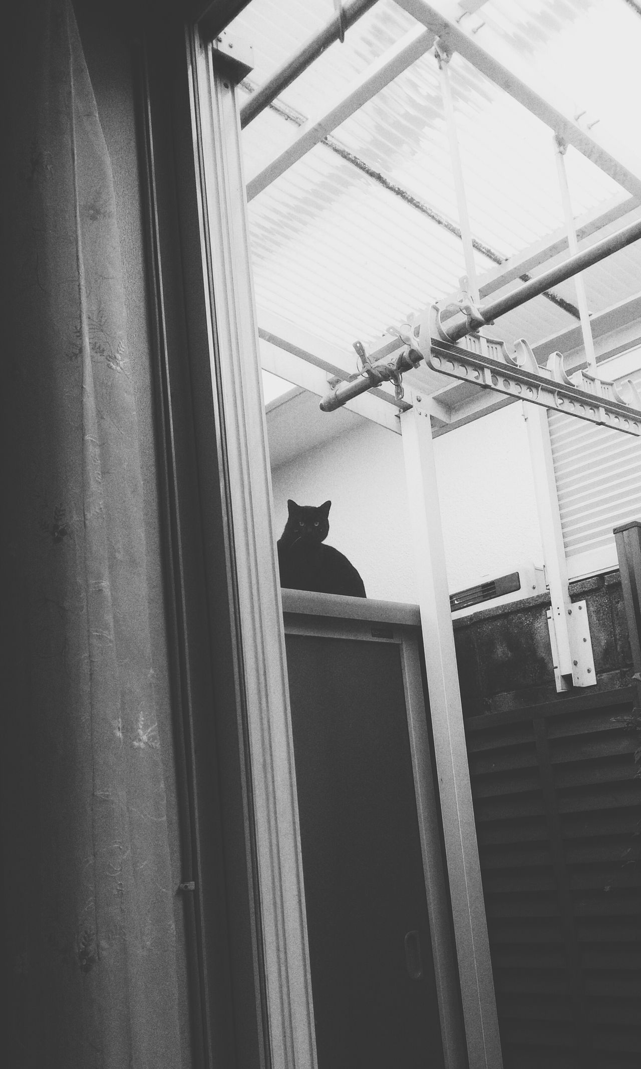 I have a visiter when its a good weather. Visiter Eyeem Animal Animal Cat Zenfone Indoors  No People Day Window Japan Photography Monochrome Hello Greeting Eye Black EyeEm Everyday Life Good Afternoon