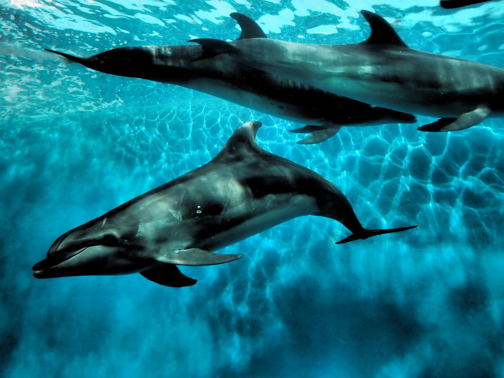Dolphin Aquarium Yokohama-shi