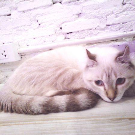 Animal Cat Cafe Thailand