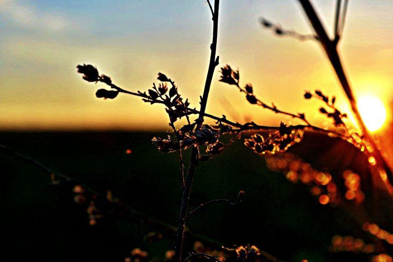 Hello World Relaxing Nature Sunset Enjoying The Sun Taking Photos