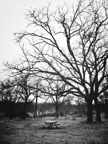 Blackandwhite Tree AMPt_community Mesa Para Cuatro