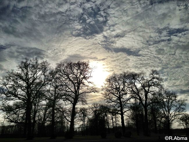 Landscape Trees Tree Sunset Sky Clouds And Sky Sky And Clouds Sun Nature EyeEm Nature Lover
