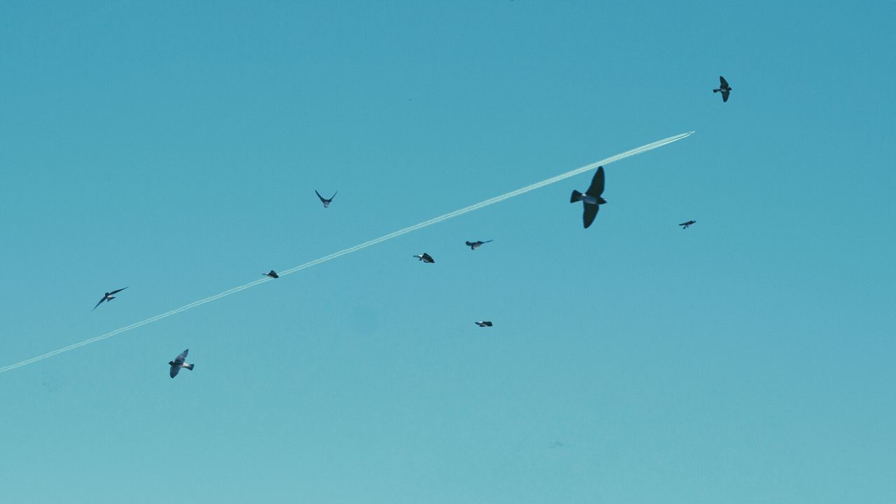 The EyeEm Facebook Cover Challenge Birds Chem Trails Turquoise By Motorola