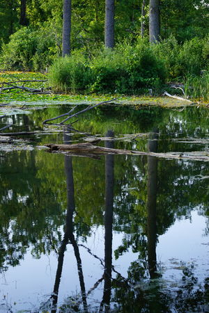 Nature Water Tree Outdoors Reflection Green Color Lake No People Day Forest Beauty In Nature Growth Pondlife Yellow Showcase July Fragility Nature Lover EyeEm Best Shots Nature_collection Flowers Of EyeEm Reflection Reflection_collection