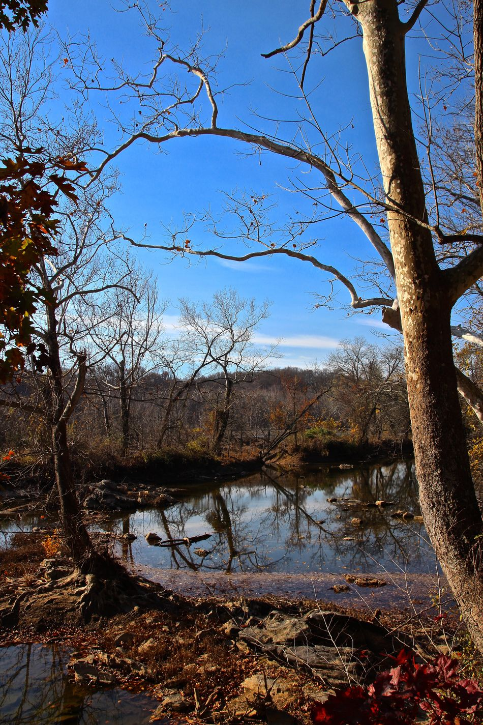 Bare Tree Beauty In Nature Branch Clear Sky Day Forest Growth Lake Maryland Nature No People Outdoors Pond Potomac River Reflection Scenics Silhouette Sky Tranquil Scene Tranquility Tree USA Water Woods