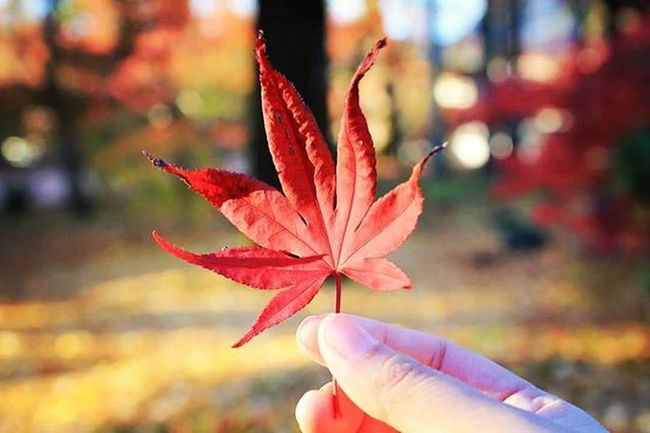 Love my short & neat nail here🈯 Thisisnotthemainpoint Autumn Mapleleaf Nature