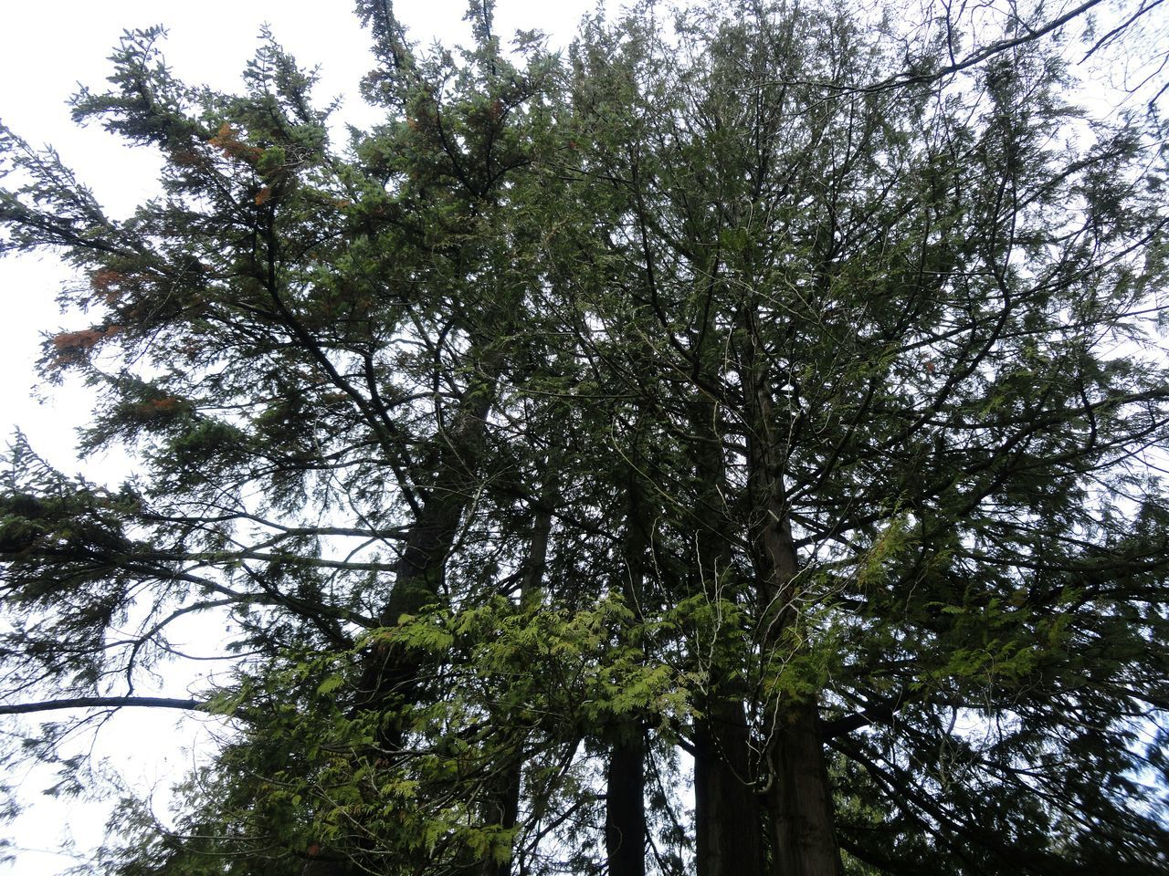 tree, low angle view, nature, growth, branch, forest, no people, beauty in nature, outdoors, day, sky