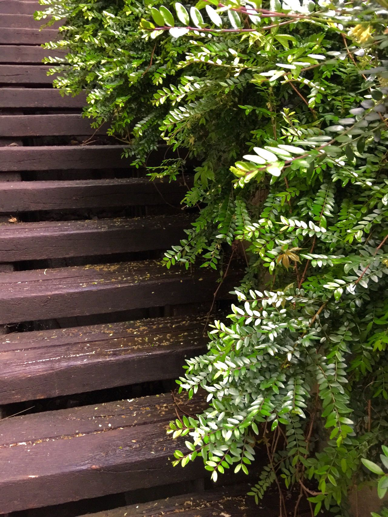 Stairs Streetphotography Street Style From Around The World Street Bush Wood Brown And Green Sopron Enjoying Life Relaxing Showing Impercetion