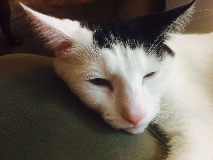 My Boy My Mew Feline Cat Sparrow