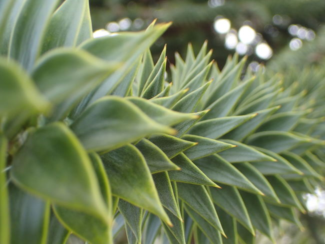 Patterns In Nature Beauty In Nature Close-up Green Color Growth Leaf Nature Plant