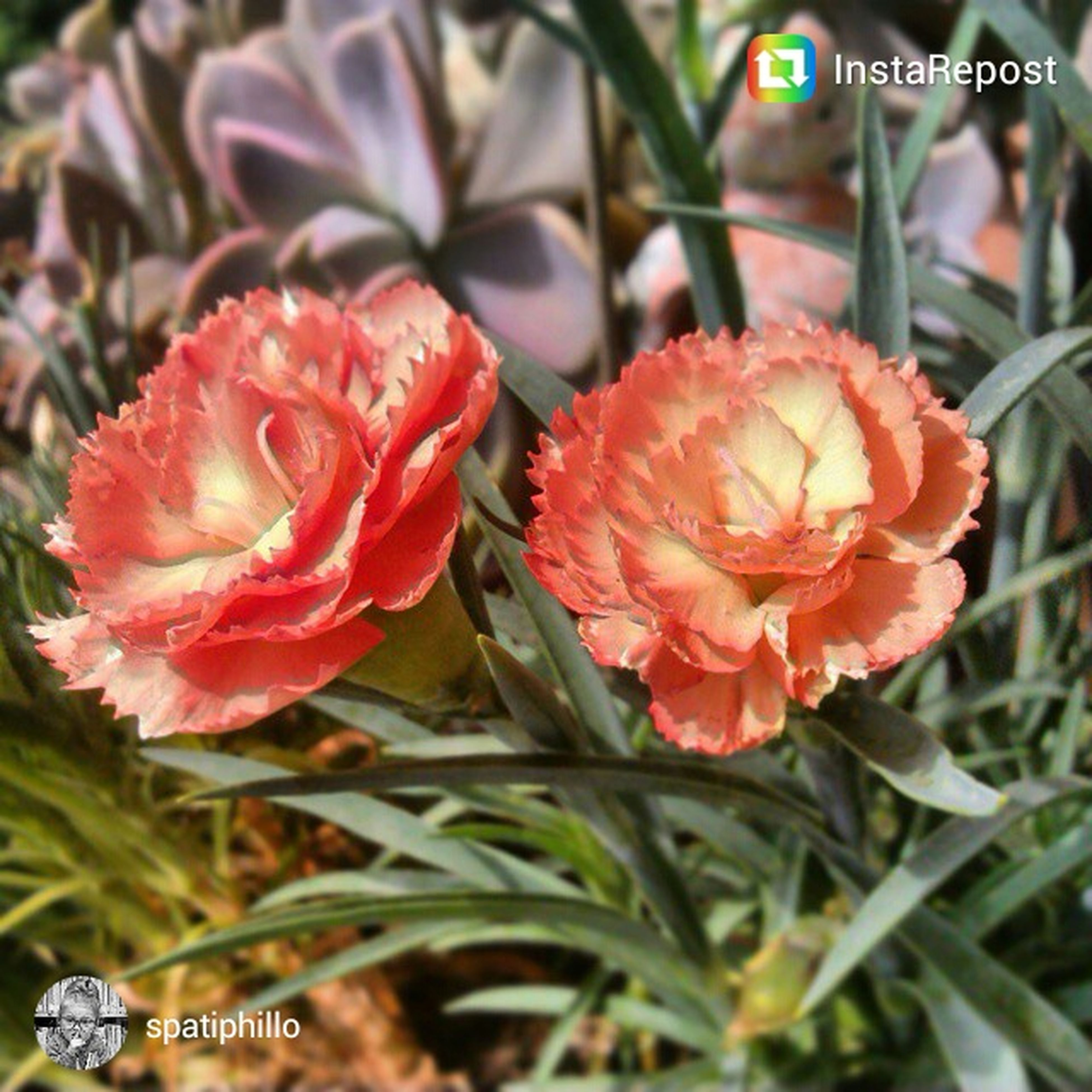 flower, petal, freshness, fragility, flower head, focus on foreground, close-up, growth, red, plant, beauty in nature, blooming, nature, high angle view, in bloom, orange color, day, outdoors, no people, park - man made space