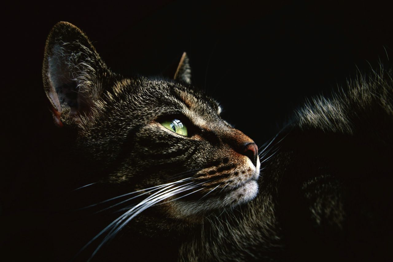 Chat One Animal Feline Brown Domestic Cat Domestic Animals