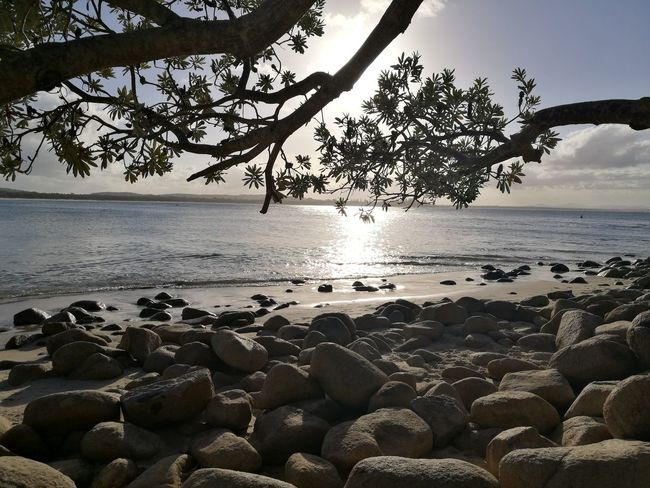 Sea Beach Tree Nature Beauty In Nature Sunset Day Sky Outdoors No People Horizon Over Water New South Wales  Australia Australian Landscape Nature Photography Green Beauty In Nature Rocks Ocean Shore Shoreline