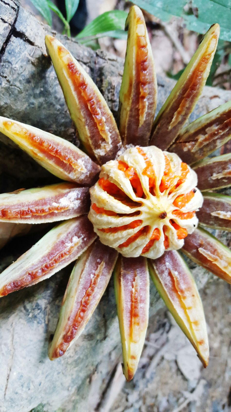 Freshness Close-up Flower Head Nature Outdoors Exotic Fruits Exotic Plants