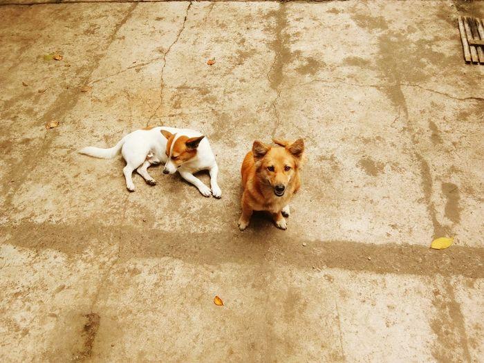 Belui Dogs Pets