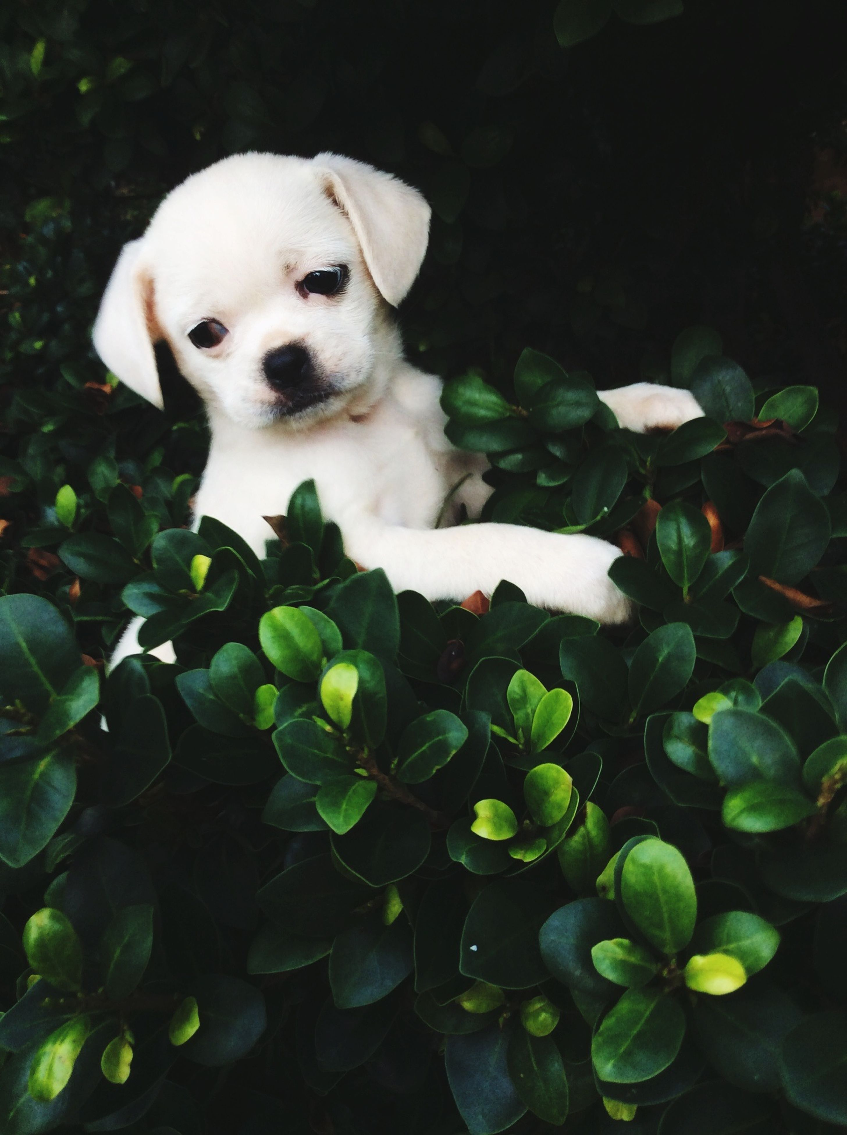 one animal, white color, dog, pets, animal themes, leaf, portrait, looking at camera, plant, domestic animals, growth, flower, high angle view, close-up, mammal, nature, cute, green color, day, sitting