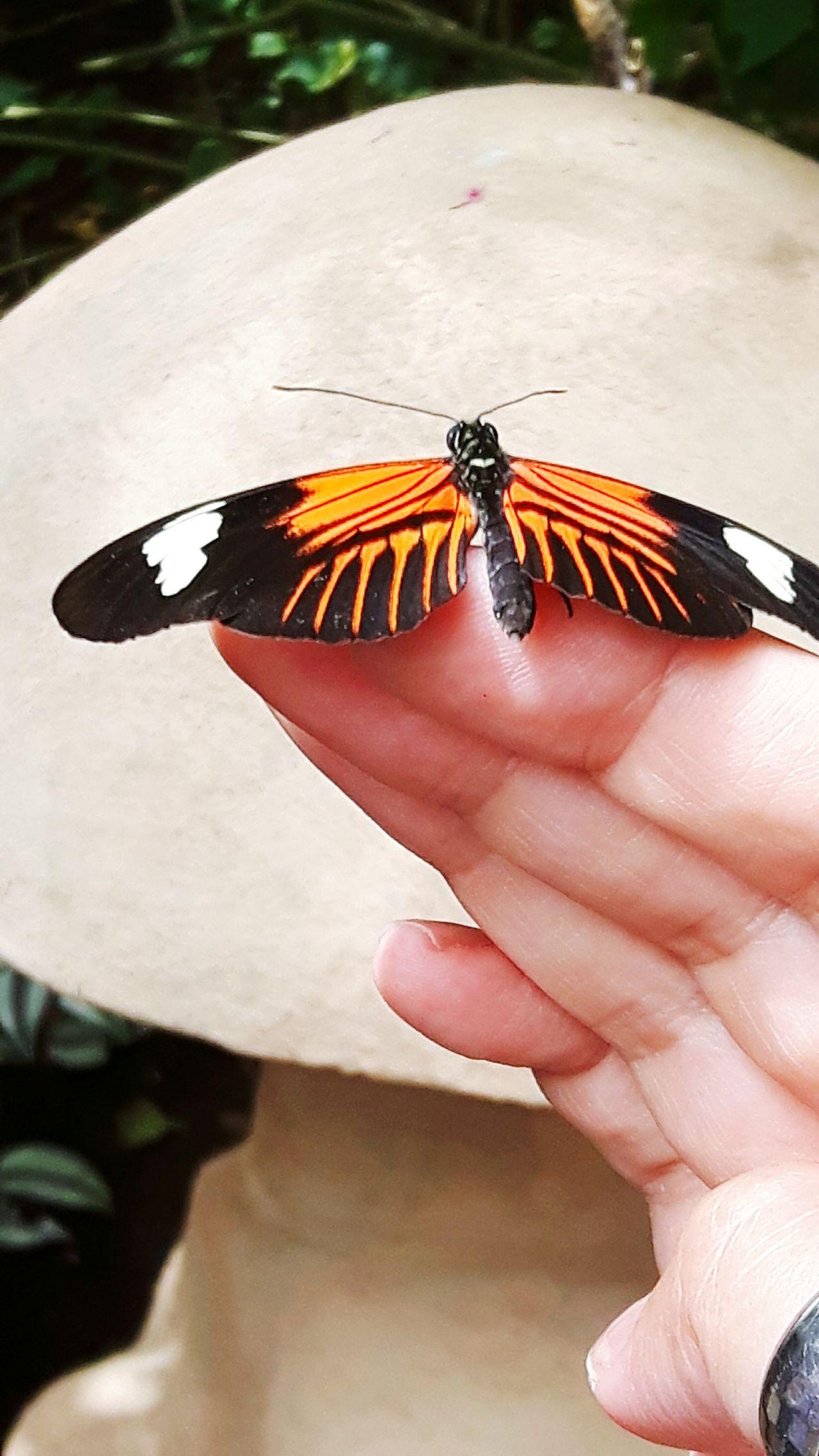 Butterflyfarm Cornwall Butterfly Exotic
