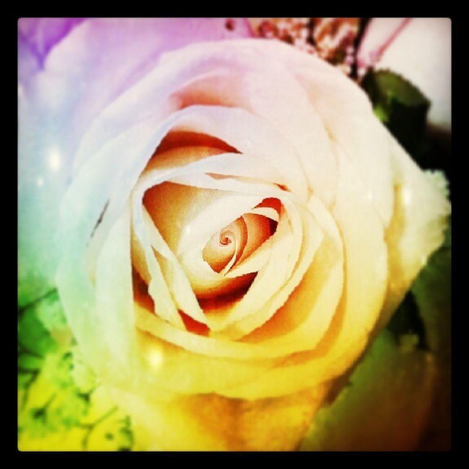 Rainbow Rose Roses Centerpiece Weddingpractice Smellssogood