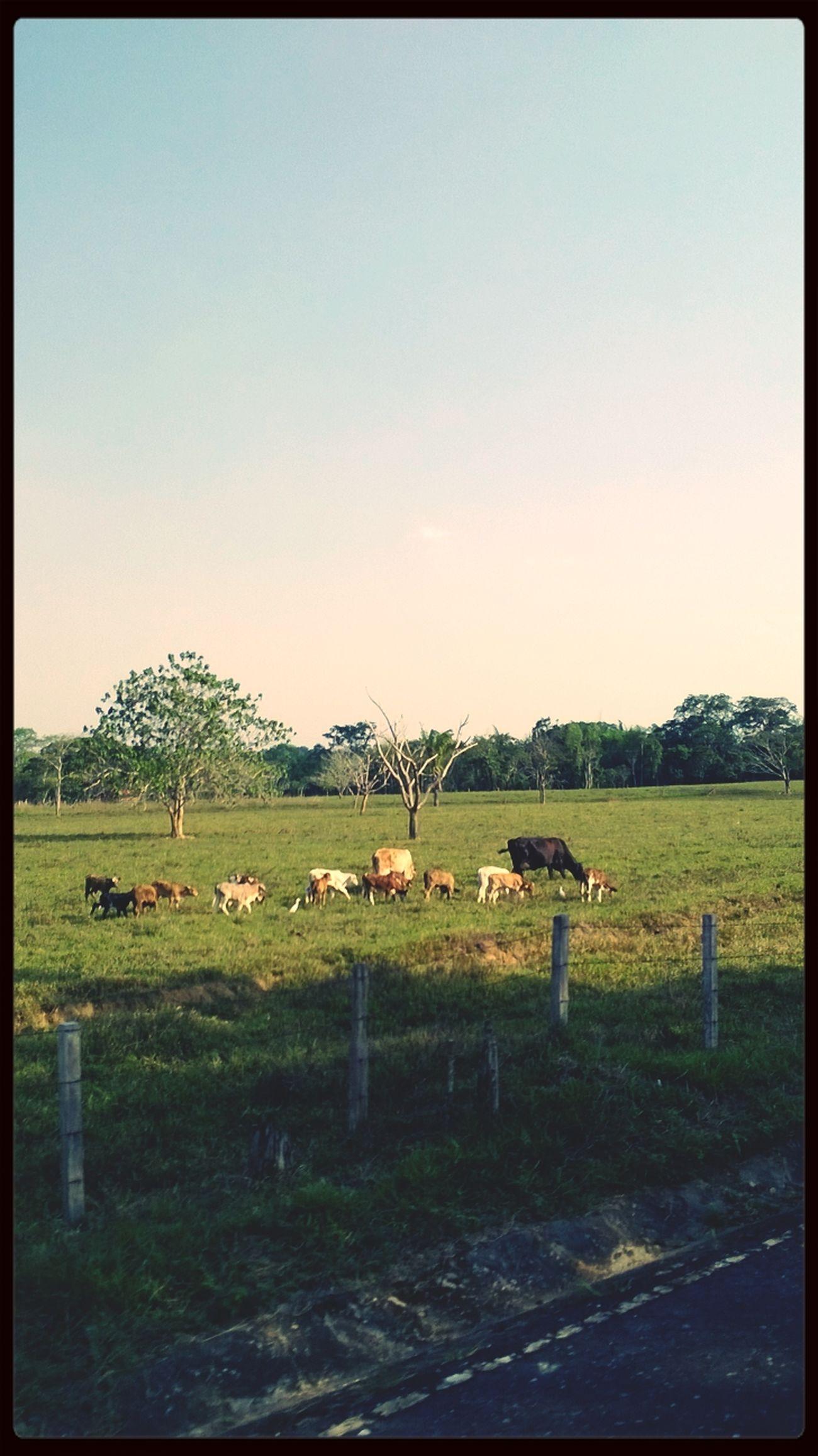 Animales Paisajes Hi! Like (: ??✌? La hermosura de la naturaleza! #Colombia☺?