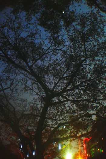 Tree And Sky Blue Sky Shillouette Beauty Redefined Cityscapes Nice View EyeEm Gallery Eyeemindonesia Eyeemasian Moment